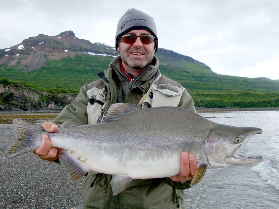 New Safari 2018 Images >> Pink Salmon